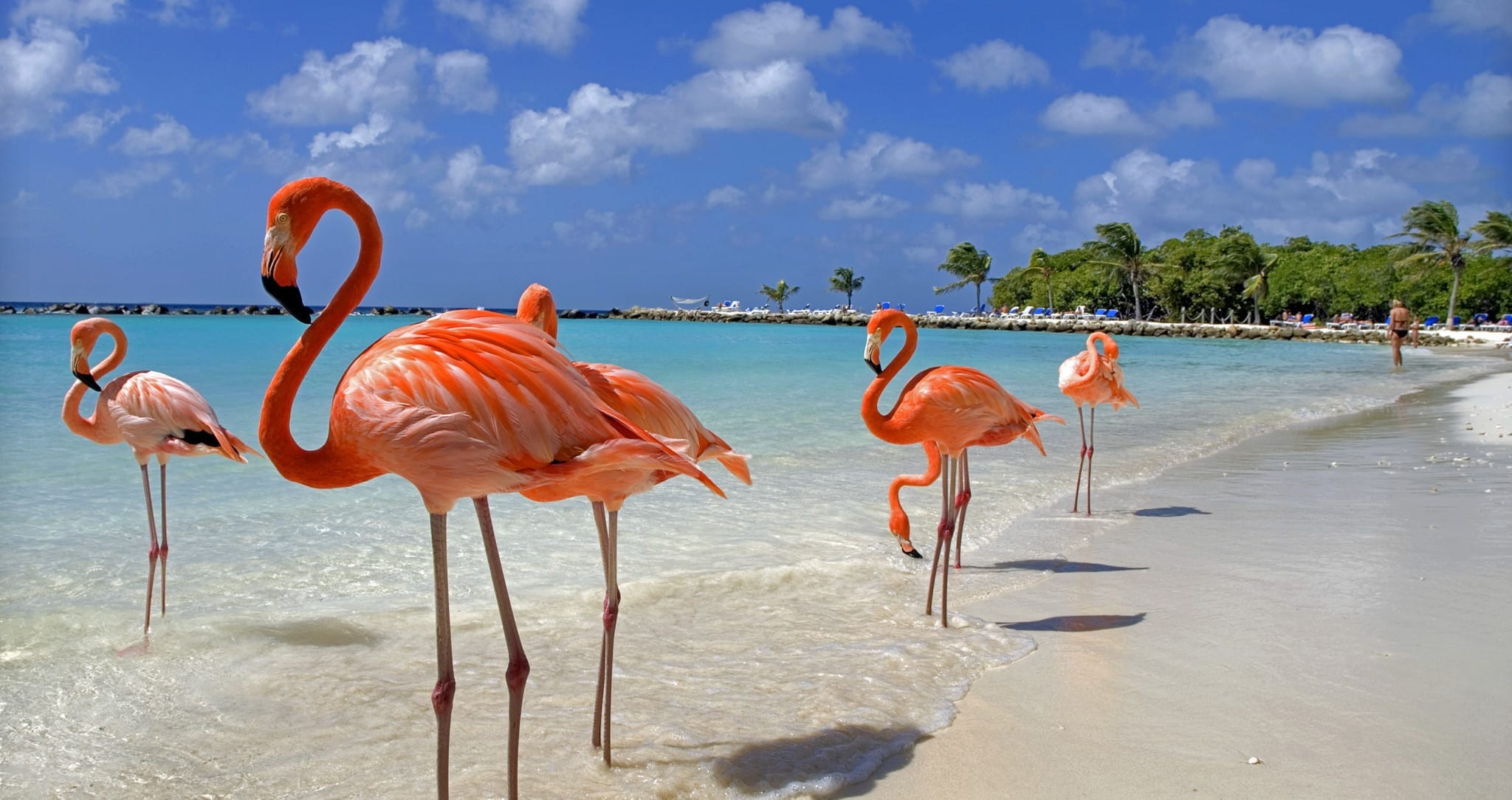 It's All About Aruba!